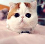 мем Няшный кот Снупи