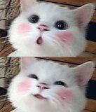 мем Няшный котик