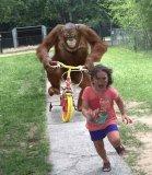 мем Обезьяна на велосипеде едет за девочкой