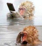 мем Обезьяна смотрит смартфон