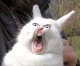 мем Орущий заяц - Колокольчики Бубенчики