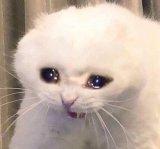 мем Плачущая кошка