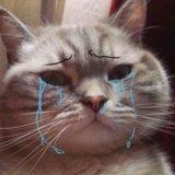 мем Плачущий кот