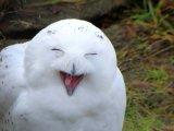 мем Полярная сова