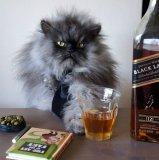 мем Полковник Мяу и бокал виски