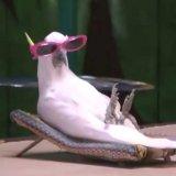мем Попугай в очках
