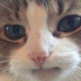 мем Расстроенный кот