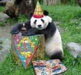 мем С днем рождения панда