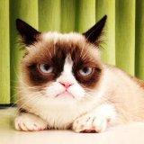 мем Самый грустный кот