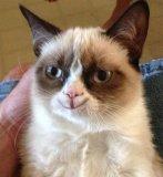мем Счастливый грустный кот