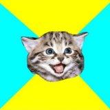 мем Счастливый котенок