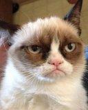 мем Сердитый кот