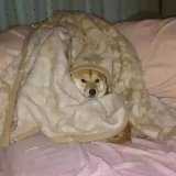 мем Собачка комфорта