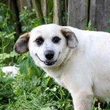 мем Собака улыбака