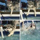 мем Собака в бассейне