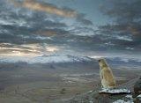 мем Созерцательная собака