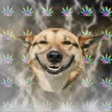 мем Stoner Dog