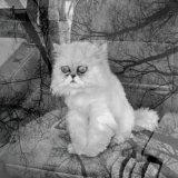 мем Тленный кот