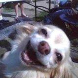 мем Улыбающаяся собака