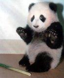 мем Успокаивающий Панда