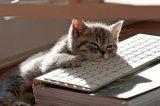 мем Усталый кот на клавиатуре