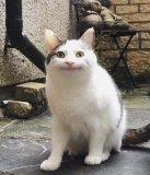 мем Вежливый кот