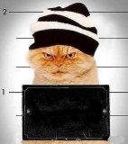 мем Зэк кот