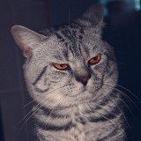 мем Злой кот