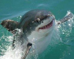 Давай обнимашки - акула