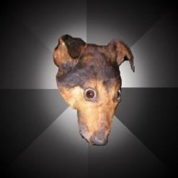 Депрессивная собака