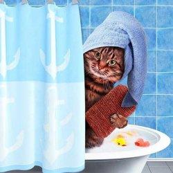 Добре утро - Кот в ванной
