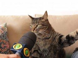 Допрашиваемый кот