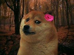 Грустная собака девочка