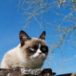 Грустный кот весной