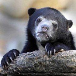 Исповедь медведя