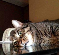 Экзистенциальный кризис кота
