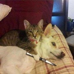 Кошка нож собака