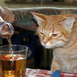 Кот алкоголик