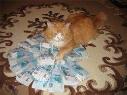 Кот и много денег