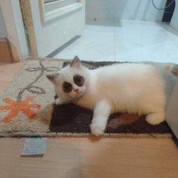Кот и синяки под глазами