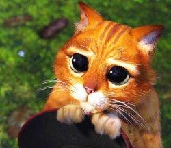 Кот из шрека с большими глазами