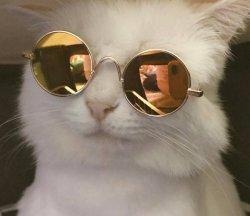 Кот крутой в очках