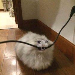 Кот кусает провод