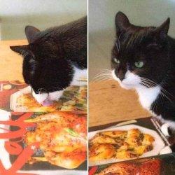 Кот лижет фото с едой на столе