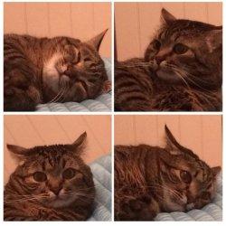 Кот ничоси