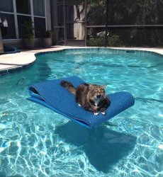 Кот плывет на матрасе