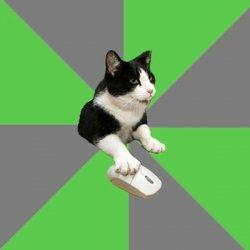 Кот ролевик