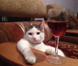 Кот с бокалом вина