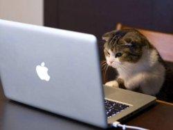 Кот с компьютером