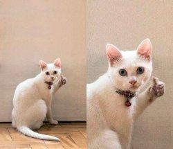 Кот с пальцем вверх